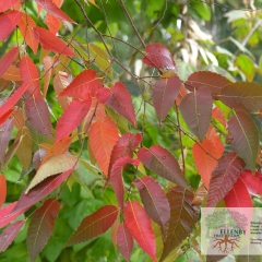 Plant Name